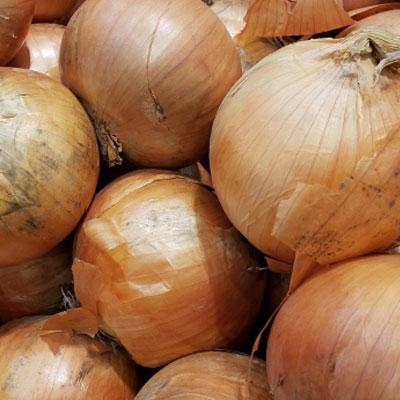 三和農場のくにうみ野菜「玉葱」